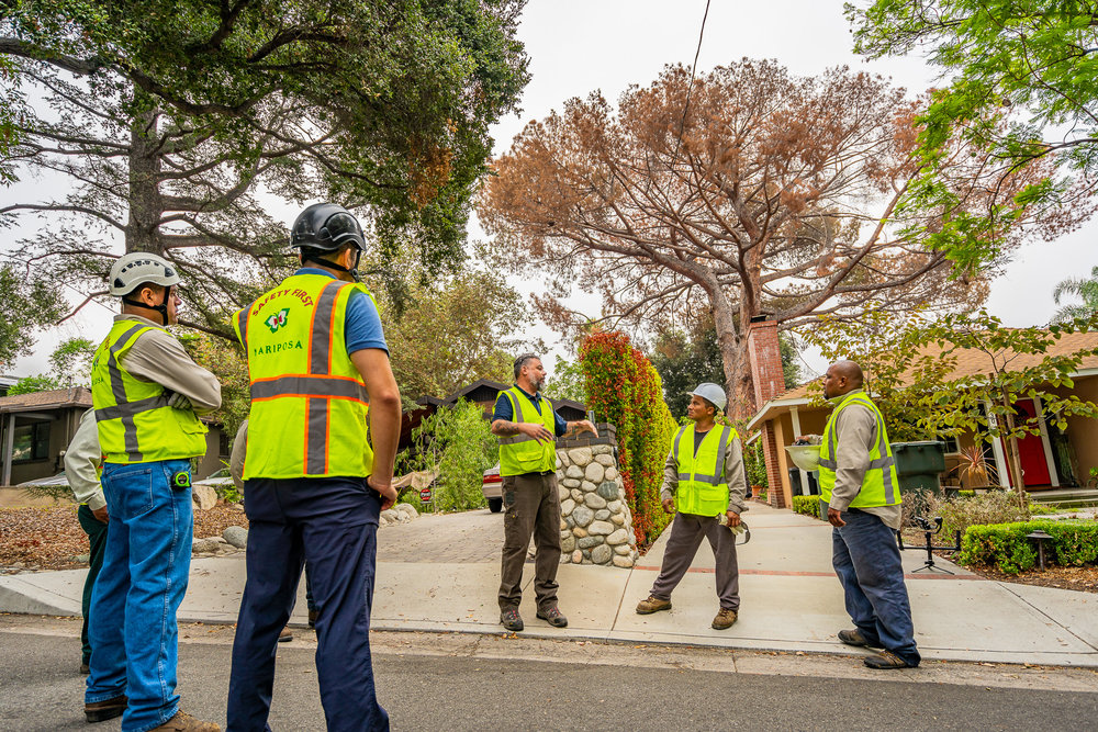 Mariposa Tree Removal Ground-10.jpg