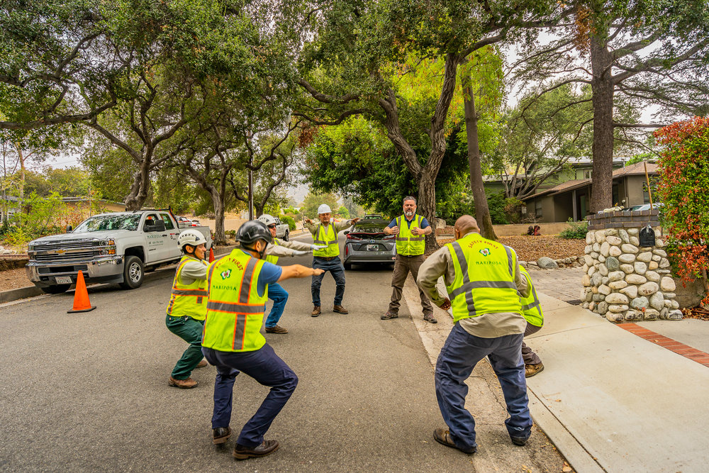 Mariposa Tree Removal Ground-13.jpg