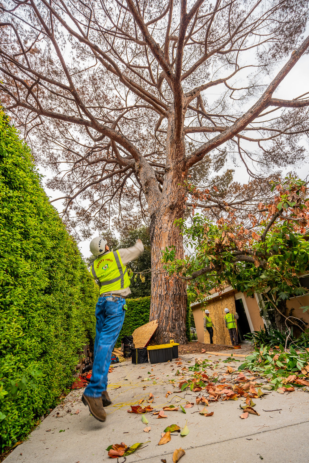 Mariposa Tree Removal Ground-31.jpg