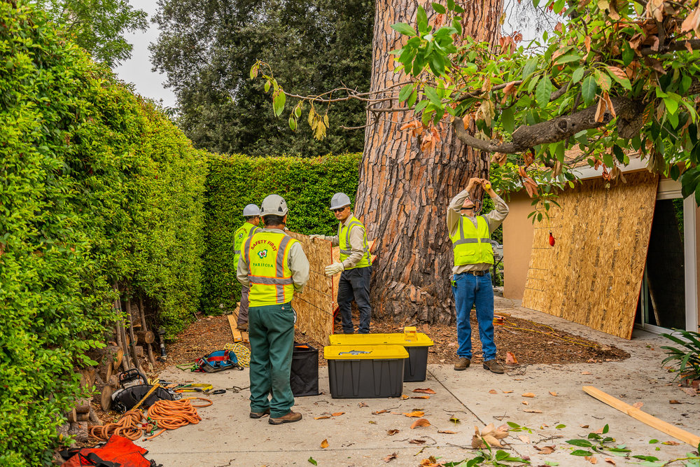 Mariposa Tree Removal Ground-32.jpg