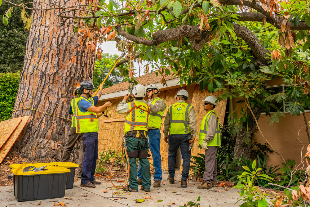 Mariposa Tree Removal Ground-41.jpg