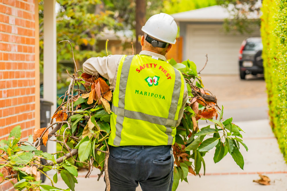 Mariposa Tree Removal Ground-57.jpg