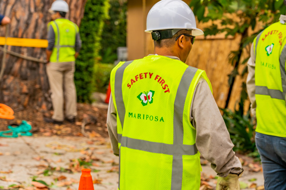 Mariposa Tree Removal Ground-59.jpg