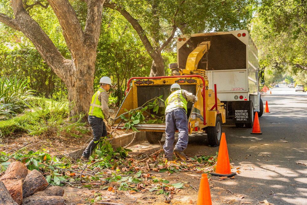Mariposa Tree Removal Ground-71.jpg