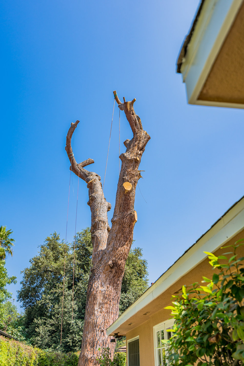 Mariposa Tree Removal Ground-79.jpg