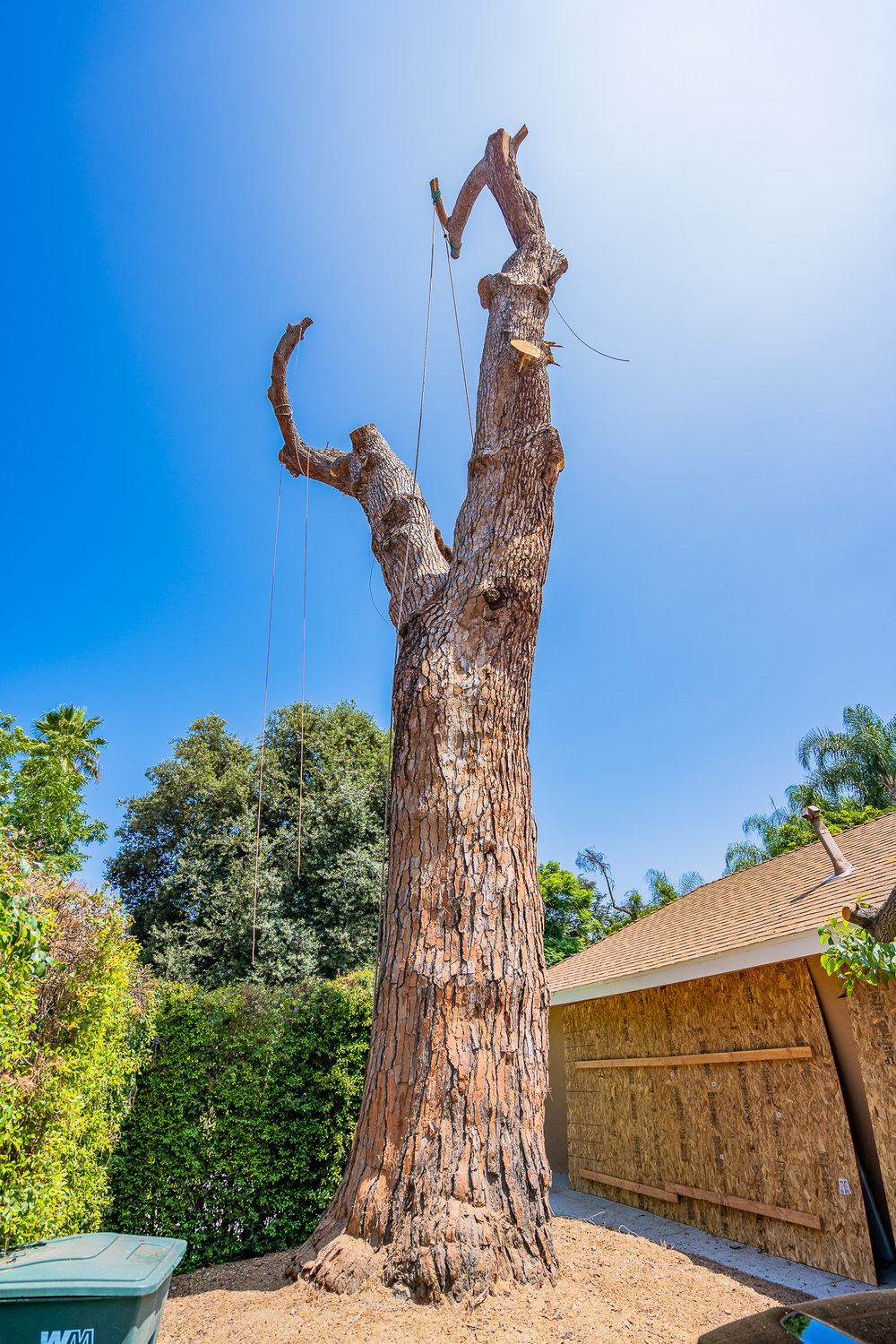 Mariposa Tree Removal Ground-84.jpg