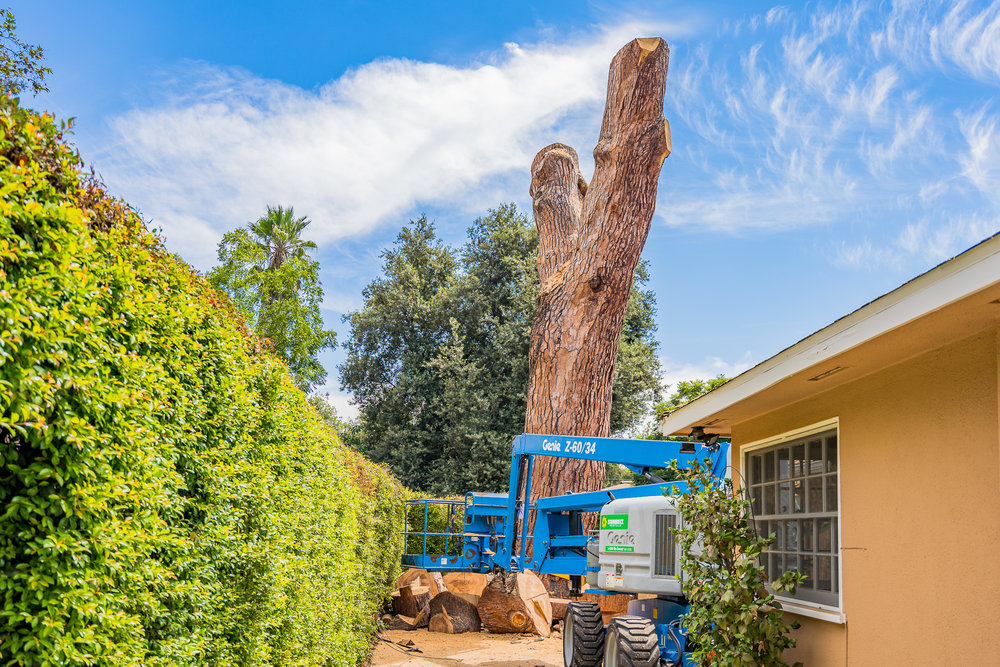 Mariposa Tree Removal Ground-90.jpg
