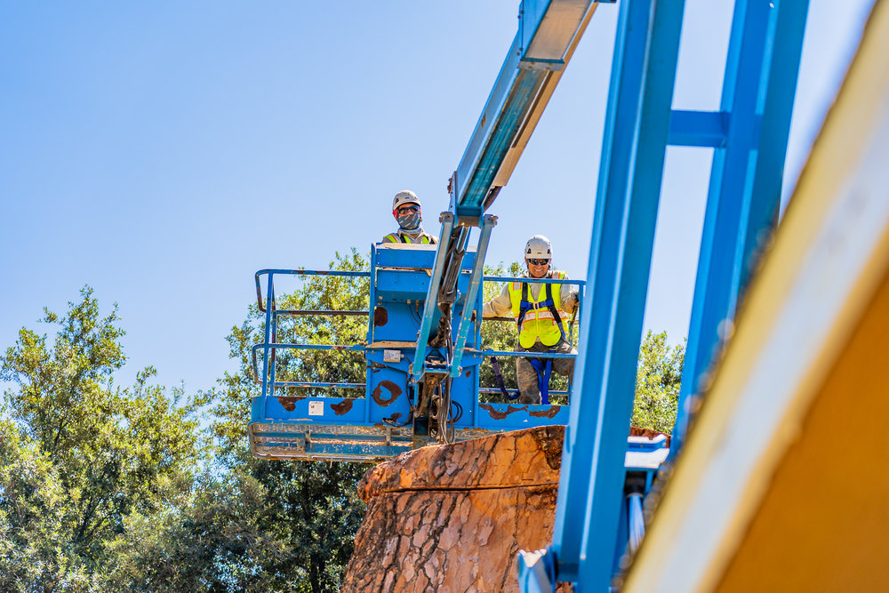Mariposa Tree Removal Ground-106.jpg