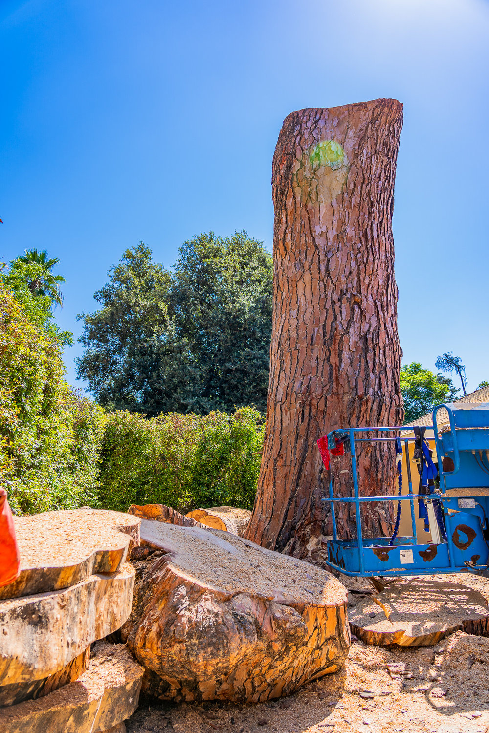Mariposa Tree Removal Ground-112.jpg