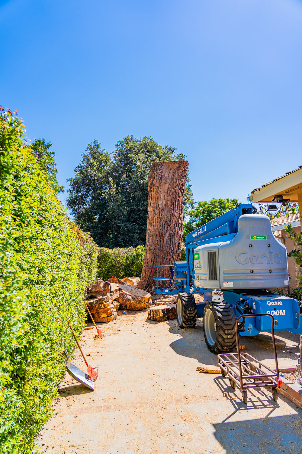 Mariposa Tree Removal Ground-115.jpg
