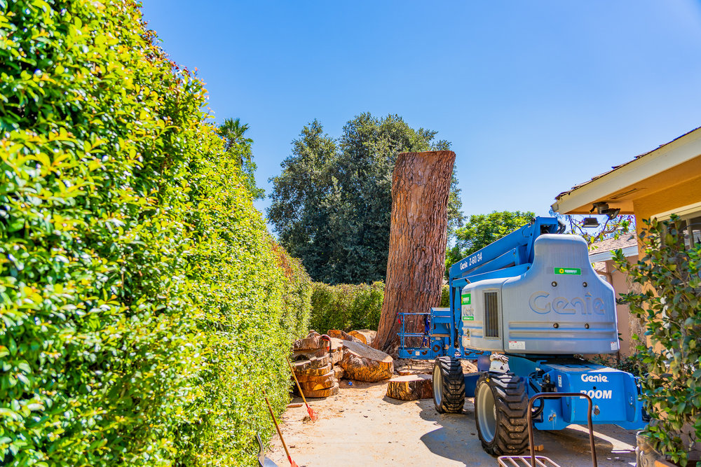 Mariposa Tree Removal Ground-116.jpg