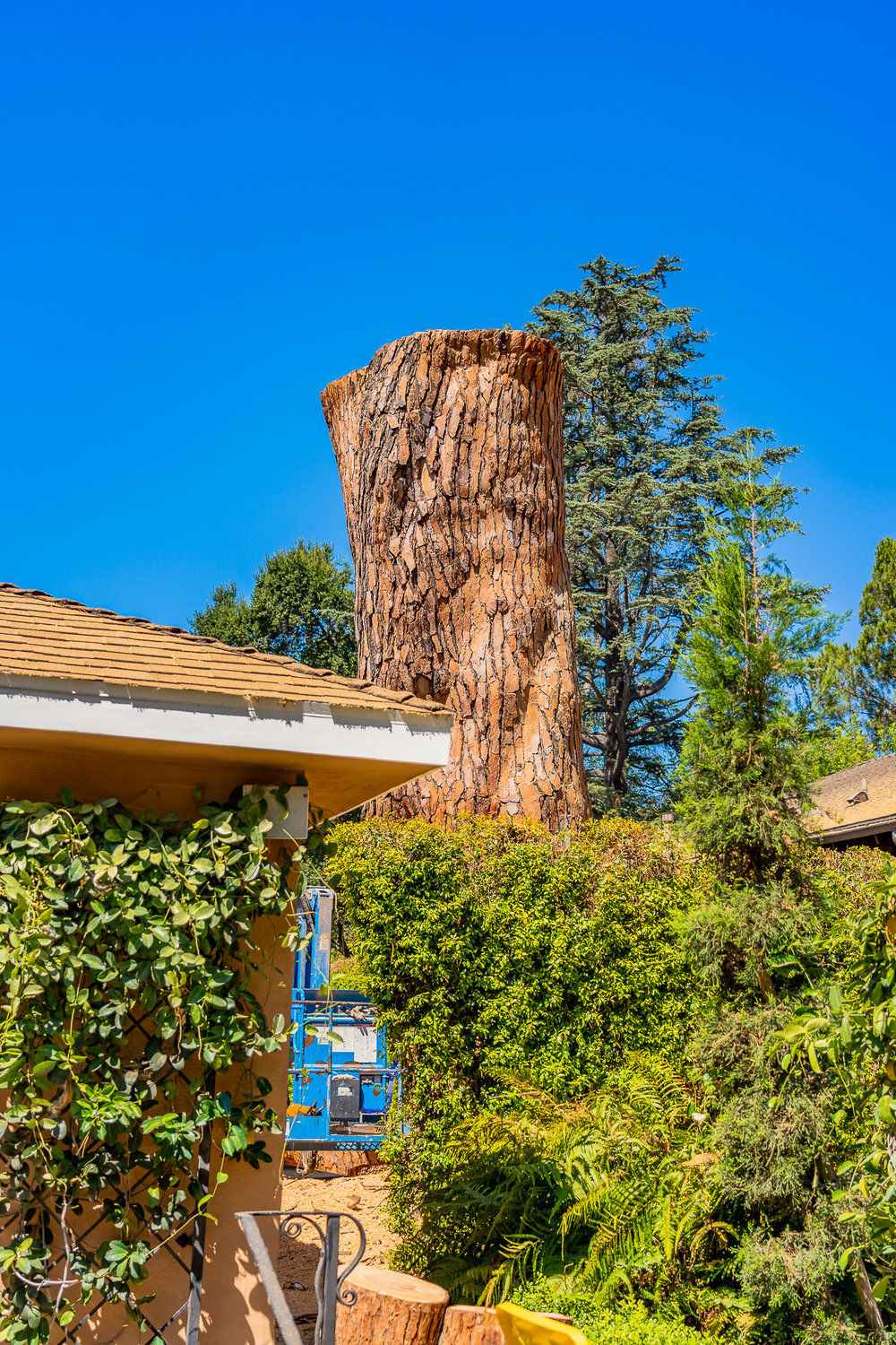 Mariposa Tree Removal Ground-127.jpg