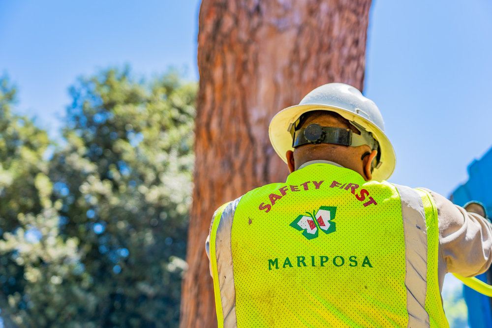 Mariposa Tree Removal Ground-139.jpg