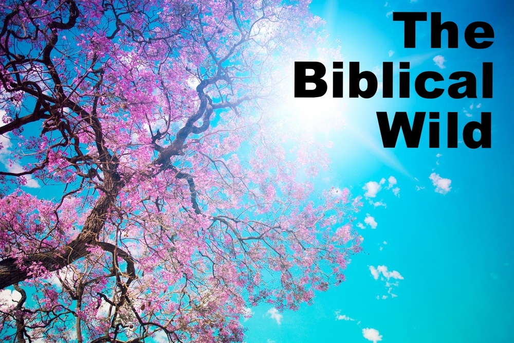 The Biblical Wild is an interactive Bible study for individuals, small groups, neighborhoods, and congregations where we will journey into the wilds of Holy Scripture through daily readings of the Old Testament and Psalms and weekly video reflections presented by the Rt. Rev. Todd Ousley, Bishop of the Episcopal Diocese of Eastern Michigan. You can follow the program on your own or in a group. Groups currently meet at 9am on Sunday (between services) and at 5:30pm on Tuesdays in the Jackson Kemper room.