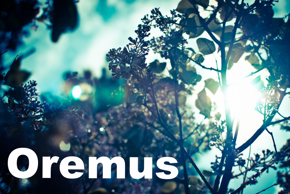 Oremus . A site with many Anglican resources including a searchable hymnal and an especially good Bible search tool. To access the Oremus NRSV search tool,  click here . To access the Oremus hymn resource,  click here .