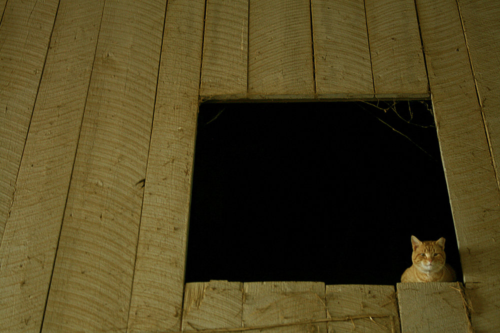 kitty in barn.jpg
