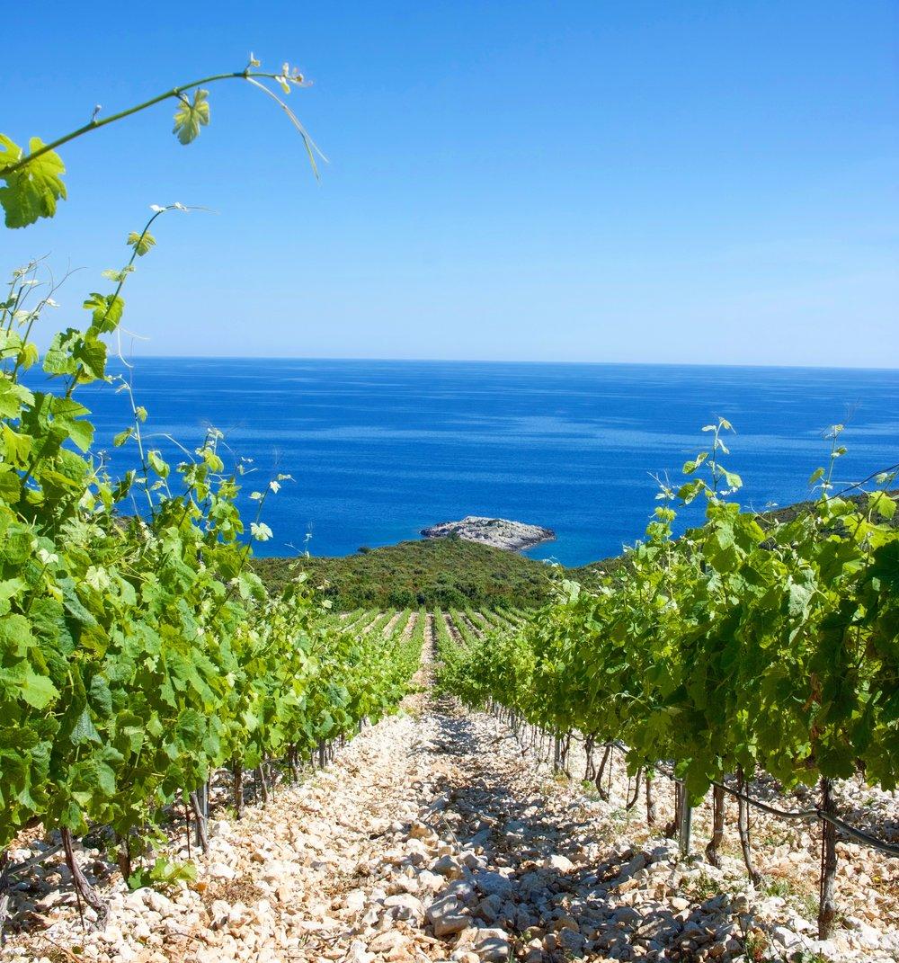 Zure vineyard, Lumbarda, Korcula, Croatia