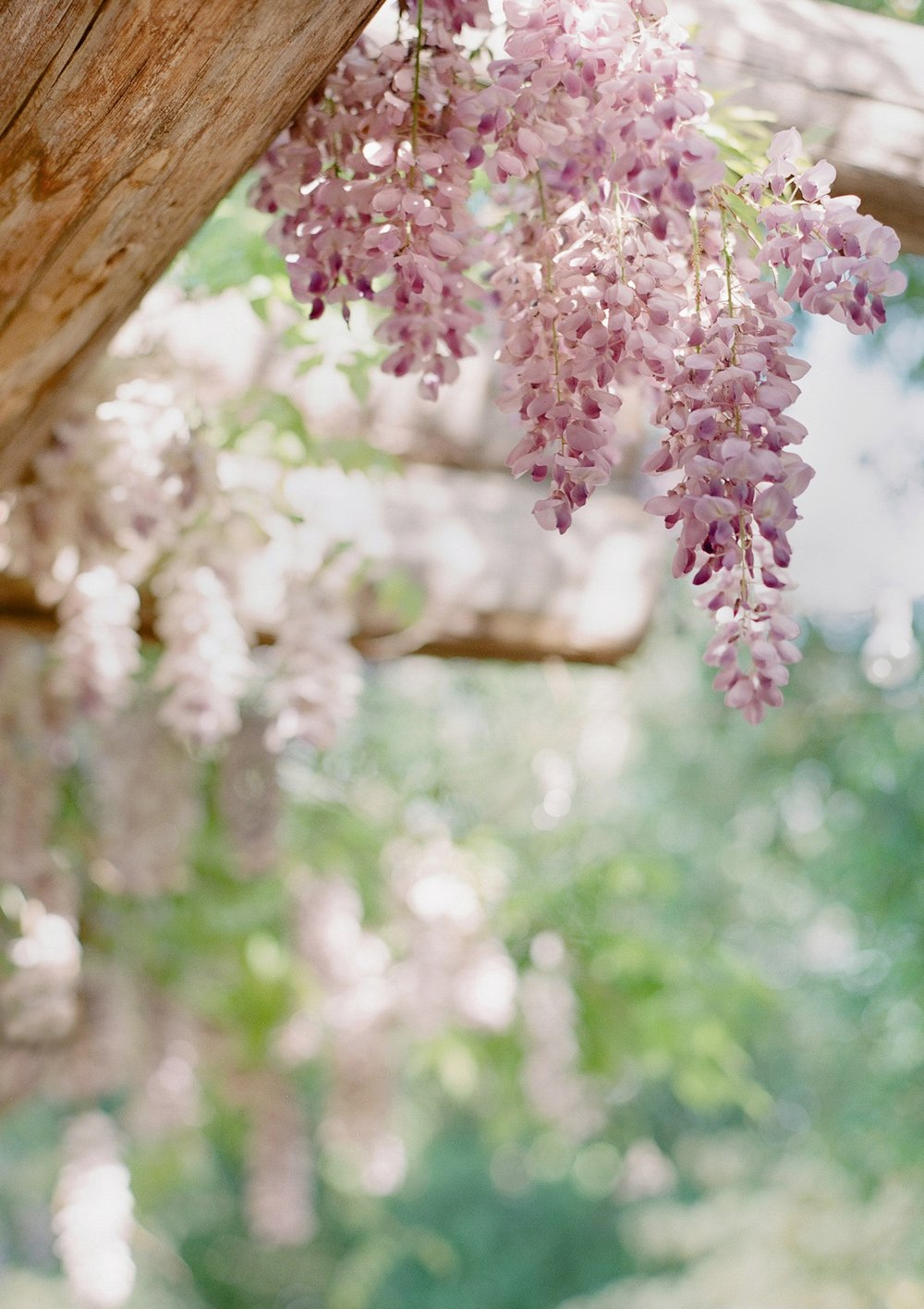 39_roblar-winery-spring-santa-ynez.jpg