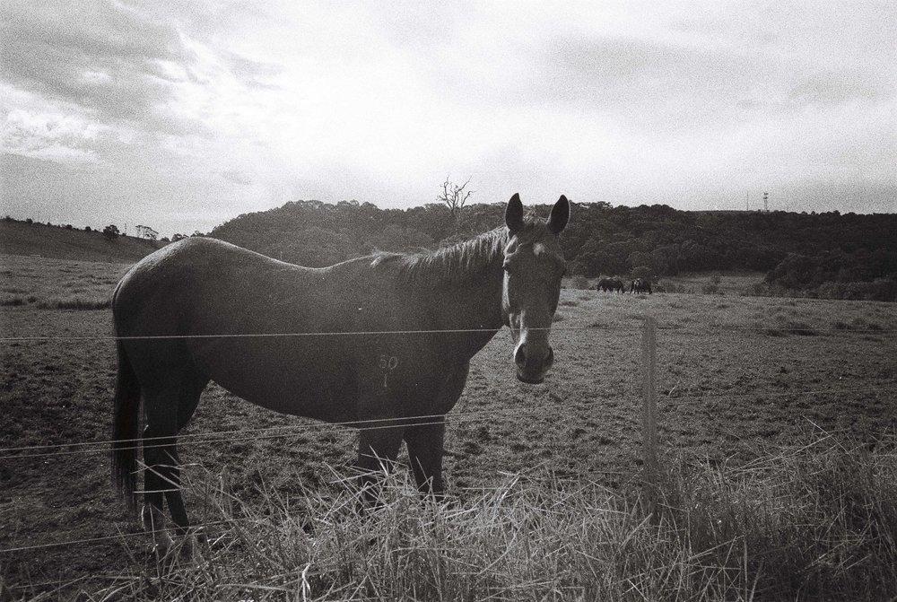 Agar's Lane Horse, taken by me on RPX 400, pushed to 800.