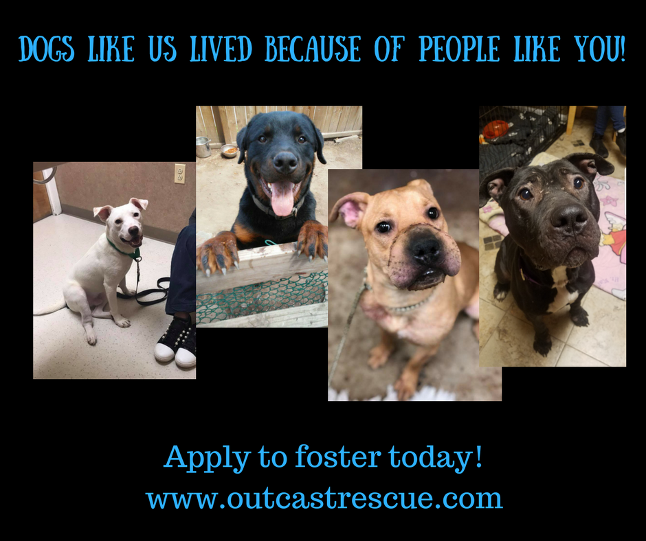 Dogs Like Us Lived Because Of People Like You!.png