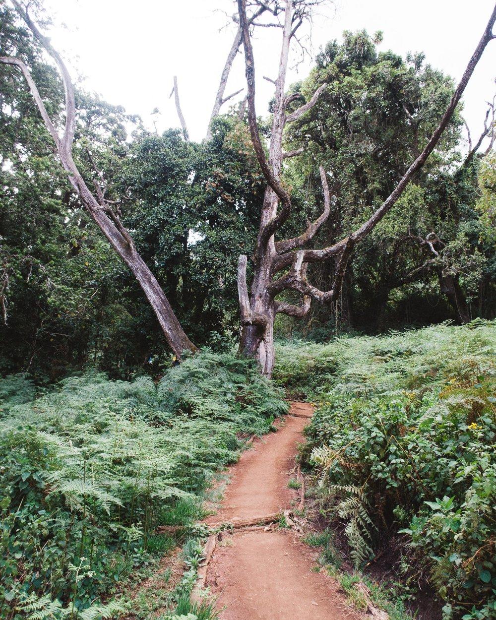 captainbarto-blog-adambartoshesky-misterspoils-mtkilimanjaro-tanzania-october2017-day1167.jpg