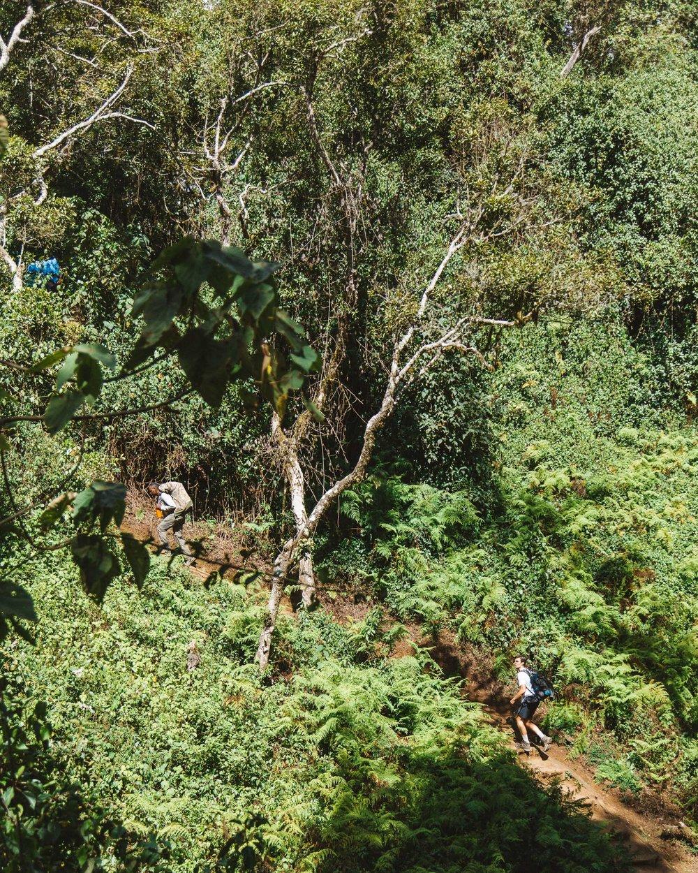 captainbarto-blog-adambartoshesky-misterspoils-mtkilimanjaro-tanzania-october2017-day1164.jpg