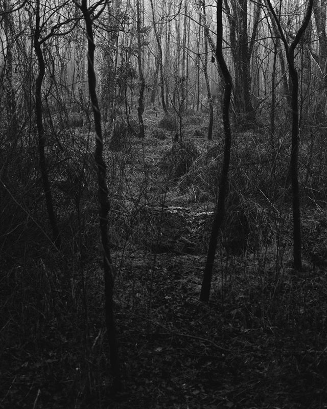 ANYWAYS, here are 4 tall, dark, sticks in the woods. They look like black lighting, to me at least. I dig it.