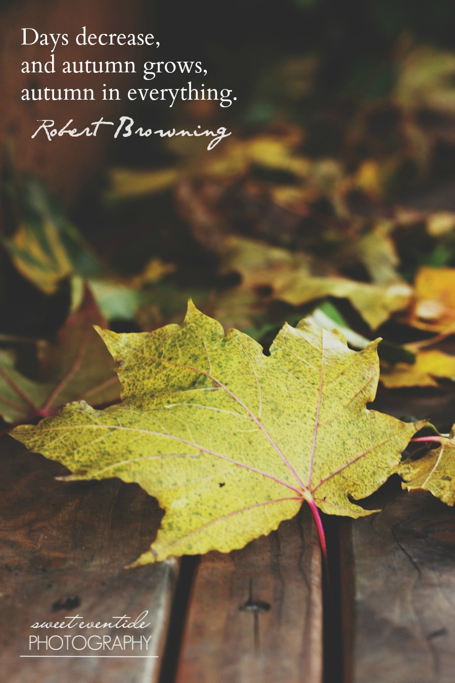 yellow maple leaf with robert browning quote