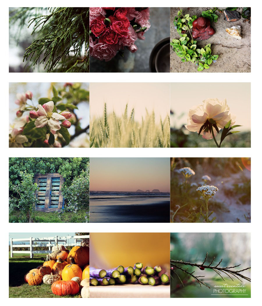 12 Nature Photographs by Sweet Eventide for 2014 Calendar
