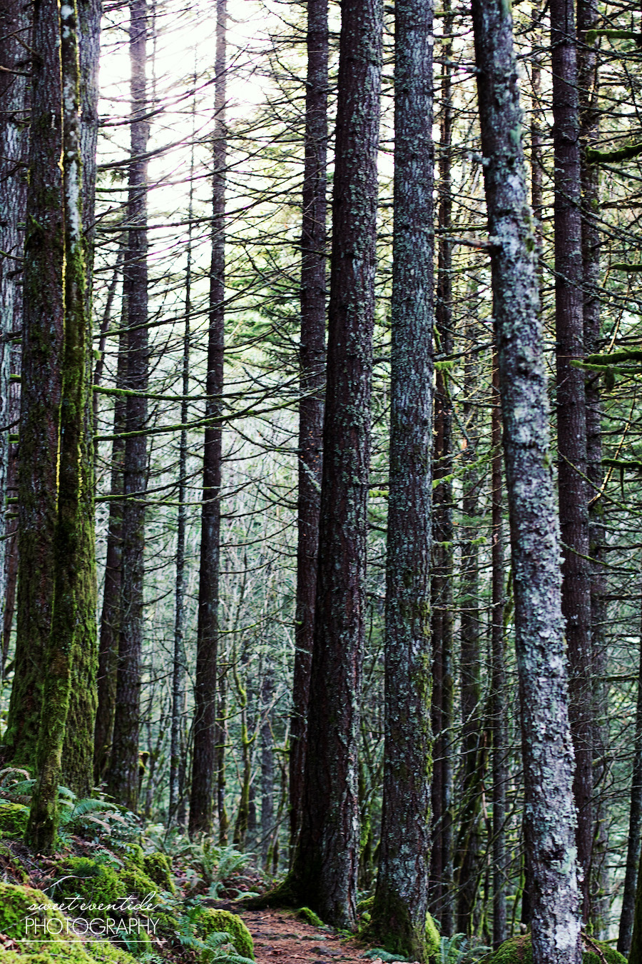 forest trees nature pacific northwest