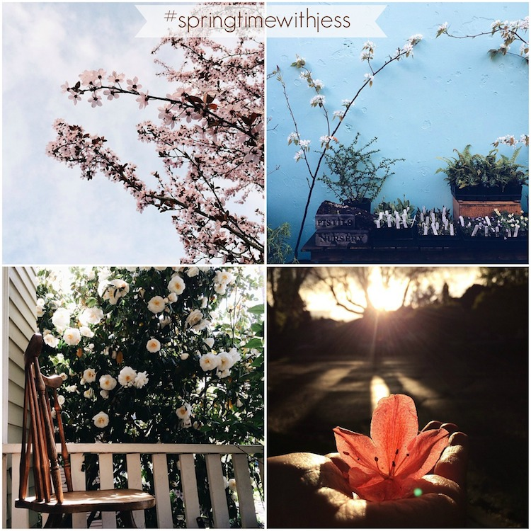 spring Instagram highlights from Sweet Eventide Photography