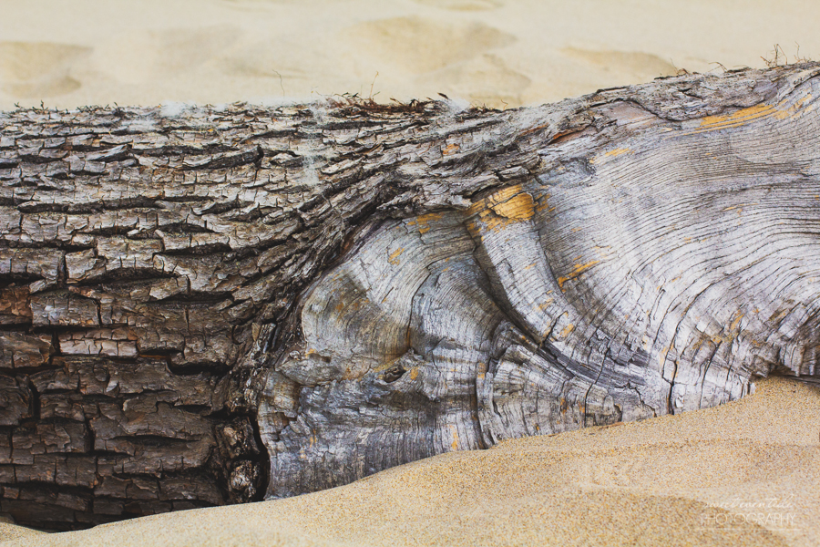 Driftwood on Rockaway Beach, OR photograph by Jessica Nichols