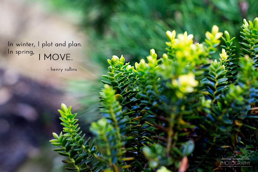 spring green growth photograph with spring typography quote