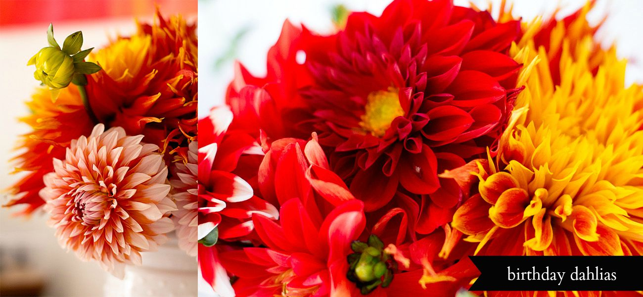 dahlia photographs diptych by Jessica Nichols, Sweet Eventide Photography
