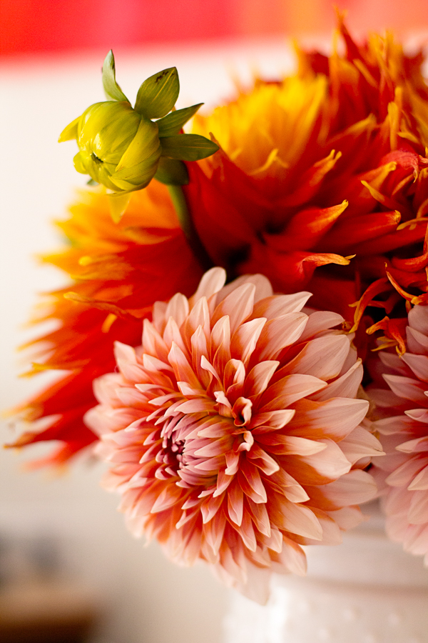 Late Summer Dahlia Bouquet photograph by Jessica Nichols, Sweet Eventide Photography
