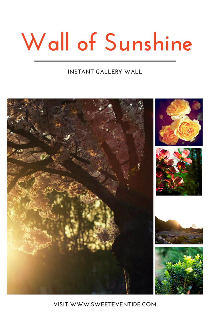 flower nature fine art photography set gallery wall decor