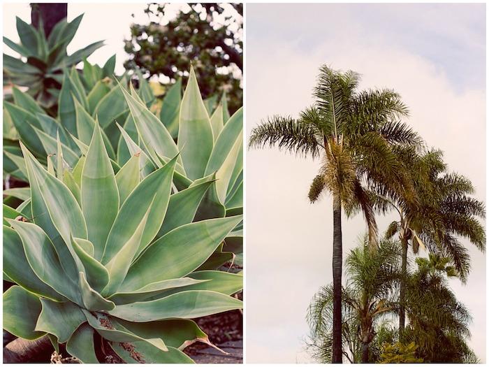 desert botanicals cactus succulent fine art photograph