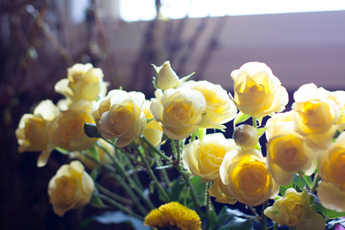 sunlit yellow roses at Sellwood Flower Co., photographed by Jessica Nichols, Sweet Eventide