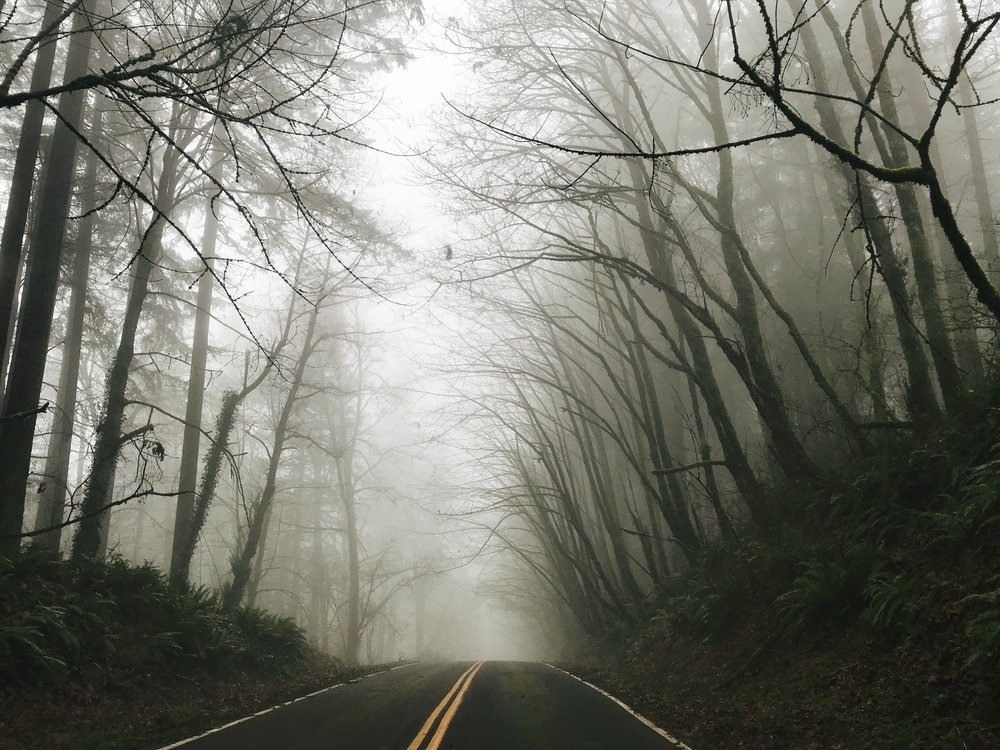 foggy road.JPG