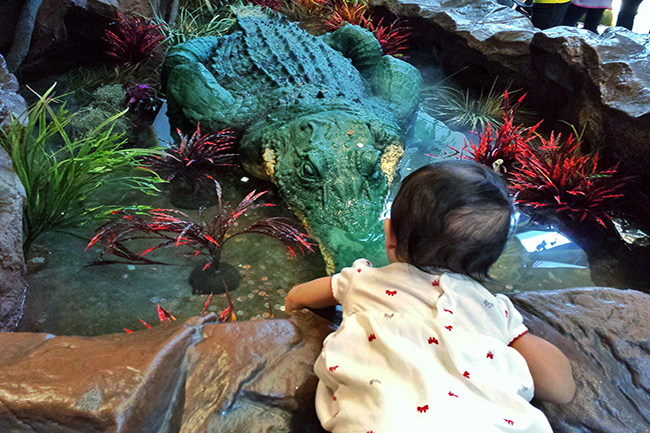 At Ontario Mall with my Toddler crocodile