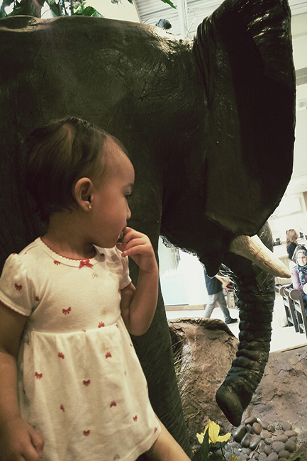 At Ontario Mall with my Toddler with elephant