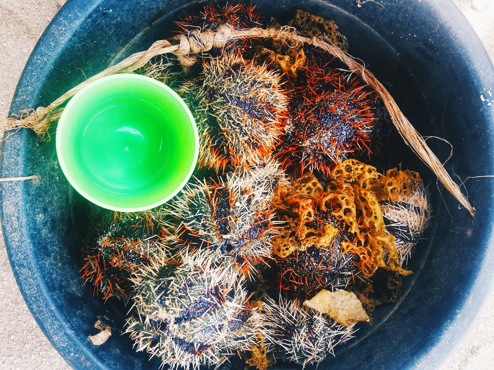 Moalboal for Holy Week  sea urchin