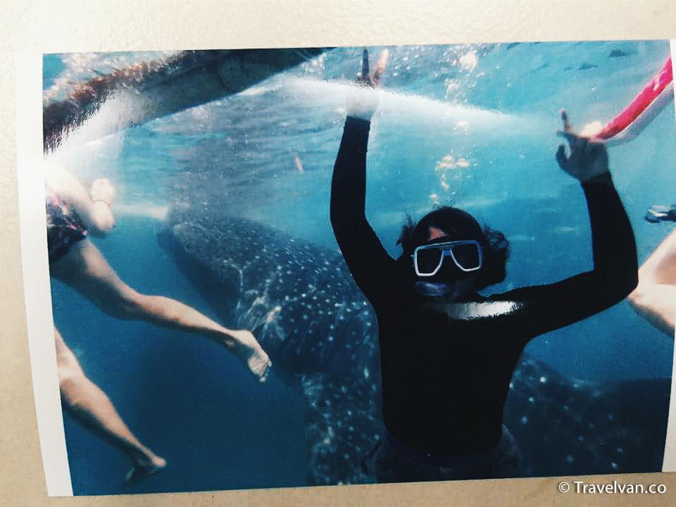 A Trip to Oslob to swim with Whale Sharks