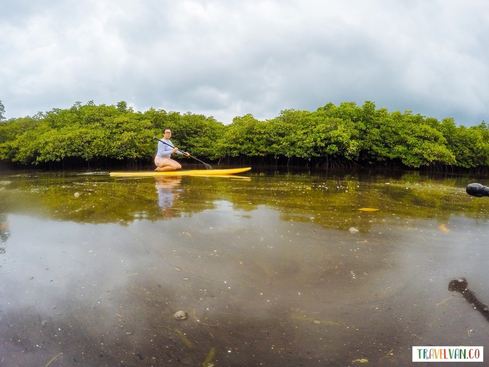 Siargao Diaries: Stand Up Paddle Board in the Mangroves