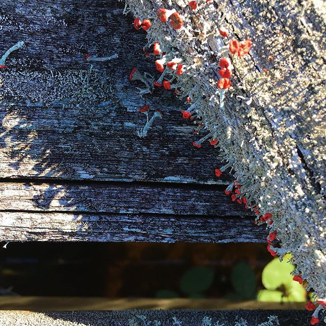 Little teeny weenies growing on this dilapidated dock.