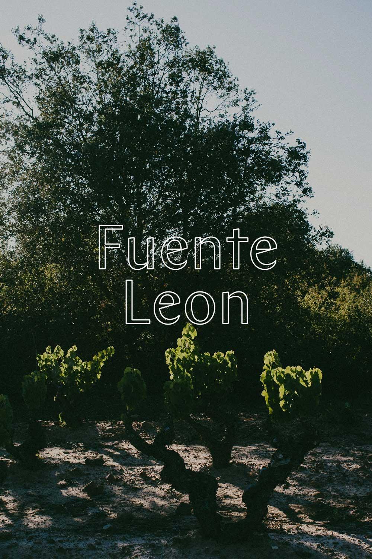 Fuente Leon - 90% TEMPRANILLO10% GARNACHA (WHITE CLONES)
