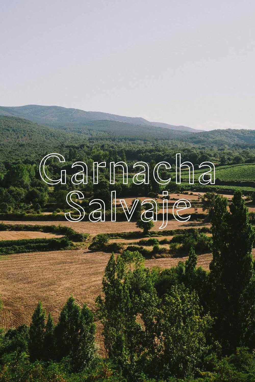 Garnacha Salvaje - GARNACHA