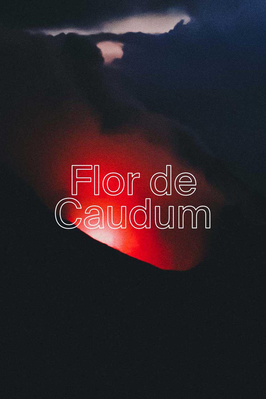 Flor de Caudum  - 100% TEMPRANILLO