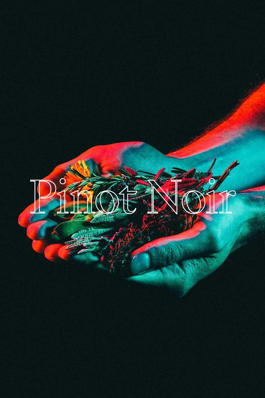 Pinot Noir C  - 100% PINOT NOIR