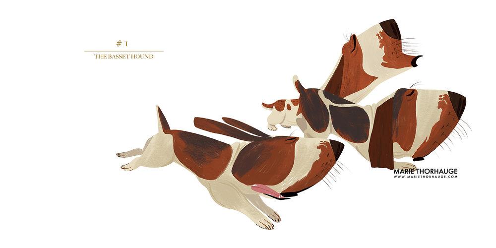 MarieThorhauge-Book_Dogs_01_Basset_wip_sml.jpg